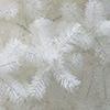 Біла ялинка